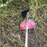 本当は危険な草刈り機
