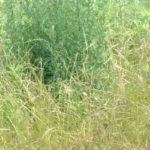 雑草を防ぐための除草剤を正しく散布する方法